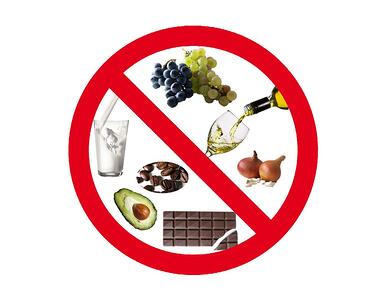 alimentos-prohibidos-para-perros