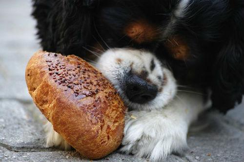 tipo de pan para perros