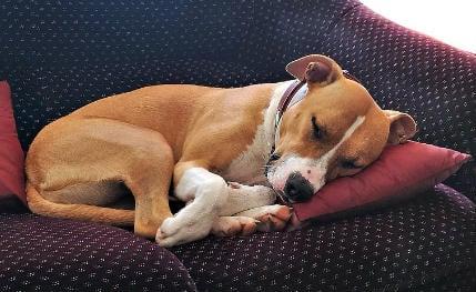 cuanto duerme un perro