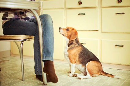 dependencia excesiva de un perro