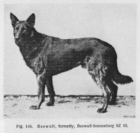 Historia y origen del perro Pastor Aleman