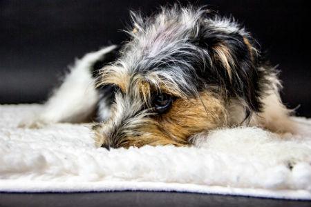 tratamiento Artrosis en perros