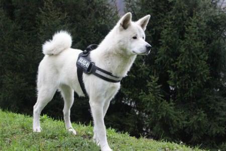perro defensor