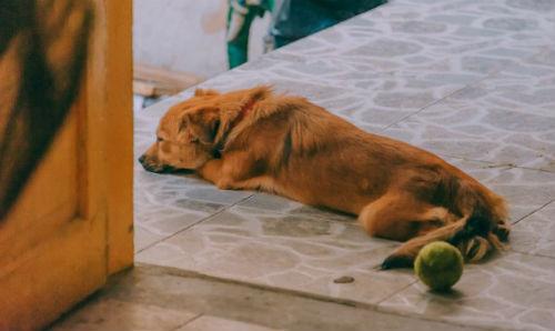 5_-_falta_de_energia_en_perros.jpg