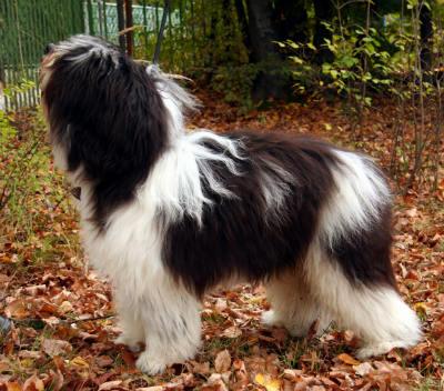 3_-_valee_sheepdog.jpg