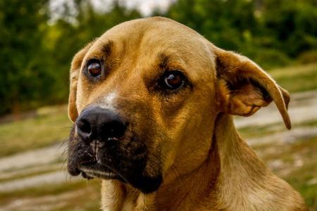 conocer el temperamento del canino