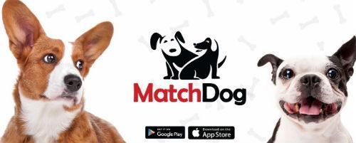 Matchdog