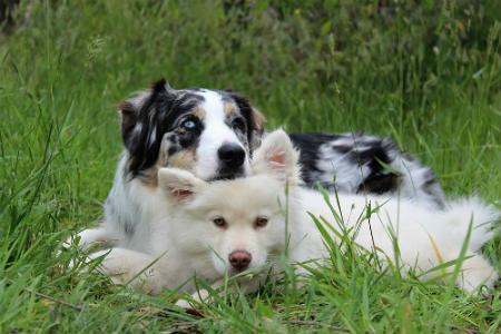 comportamiento de los perros en su entorno natural