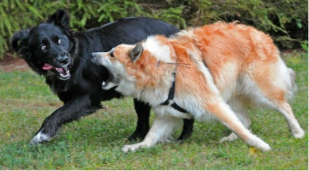 perro con problemas de comportamiento