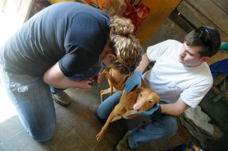 colaborar con las actividades de la protectora de animales