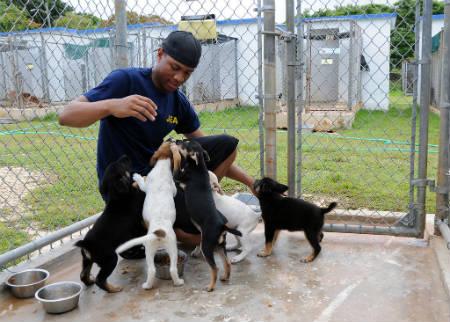 proteccion y cuidado de los perros