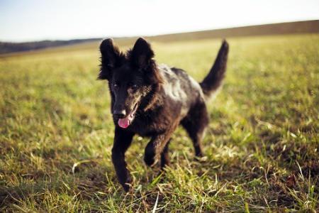 insolacion en perros