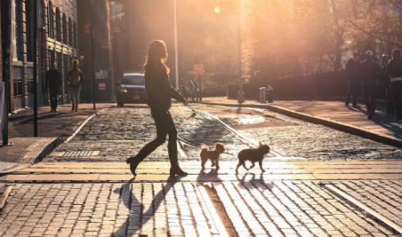 Moderar horarios de paseo