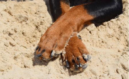 cuidados patas de perro