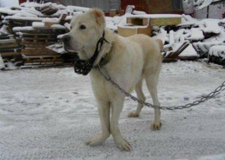 enfermedad asociada a la genetica canina