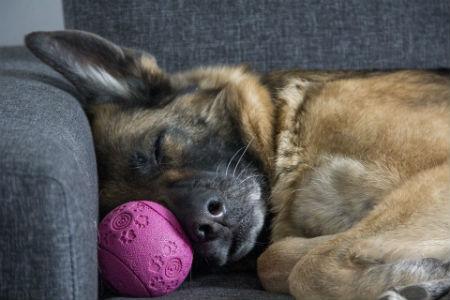 horas que duerme un perro
