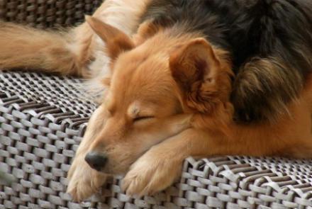 perro duerme todo el dia