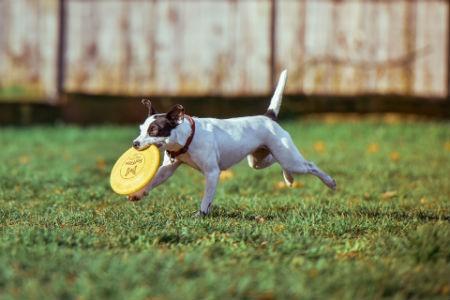 el ejercicio es esencial para los perros