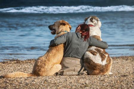 prolongar la vida de tu perro