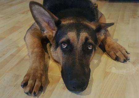 Causas de la ansiedad en perros