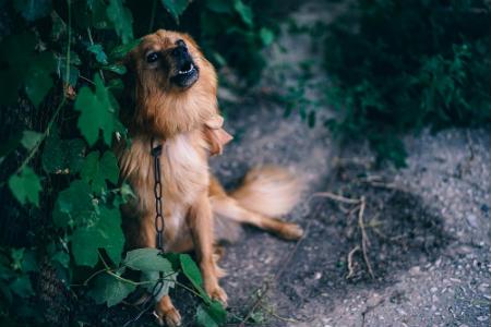 perro avisa de terremoto