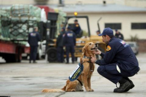 perros ayudan a prevenir terremotos