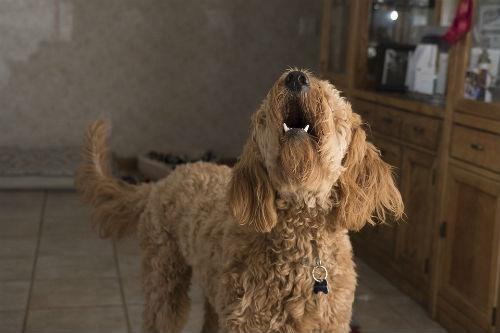 perros perciben terremotos