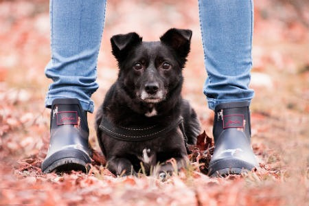 enfermedades que los perros y los humanos pueden compartir