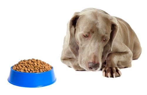 perdida de apetito en perros