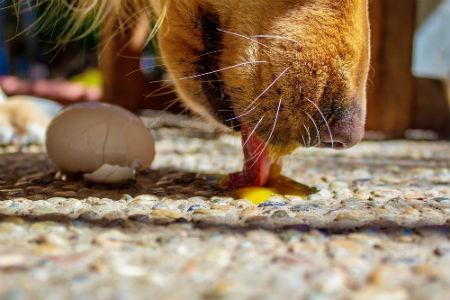 dieta perros con diarrea