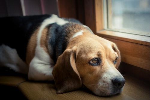 enfermedades mala alimentacion canina