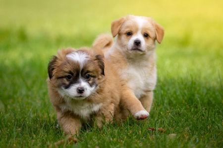calcio en cachorros