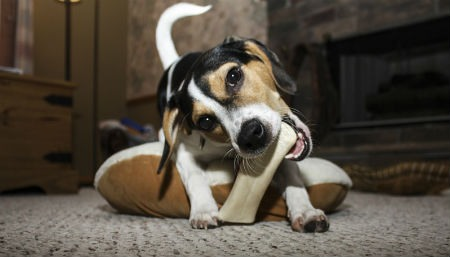 suplemento de calcio para perros