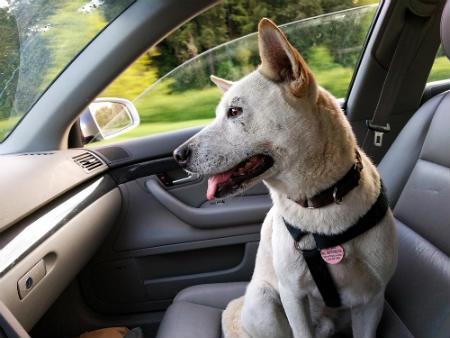 lo que necesitas saber para Viajar con perro