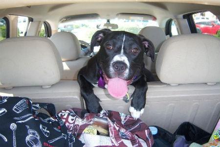 equipaje para Viajar con perro