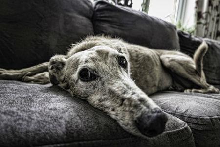 causas Insuficiencia renal en perros