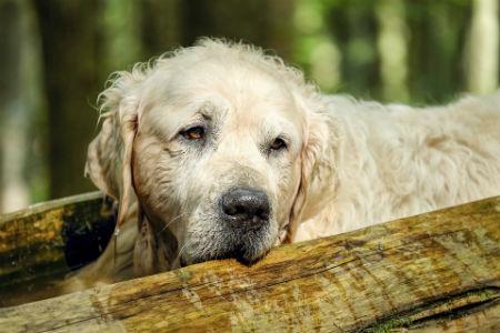 Tratamiento de insuficiencia renal en perros