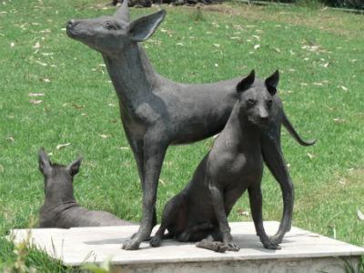 raza Xoloitzcuintle