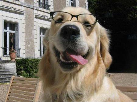 perros mas inteligentes