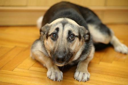 causas temblores perros