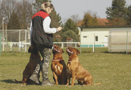 adiestrar perro refuerzo positivo