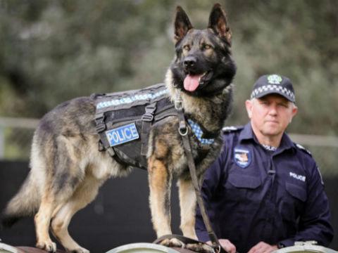 profesion perros policias