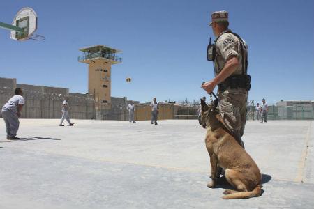 razas perros policia