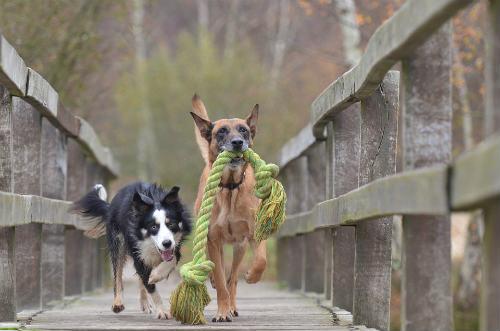 mecanismo de defensa natural del perro
