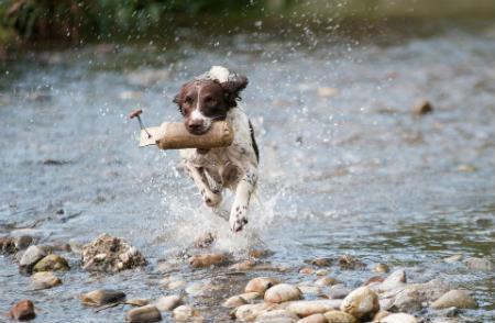 alimentos para fortalecer defensas perro