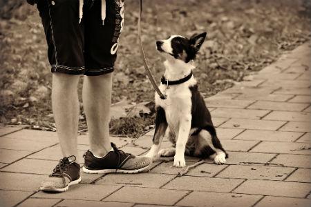 aprender como pasear a tu perro