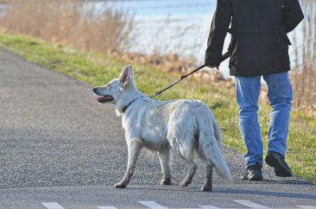 correas para pasear perro