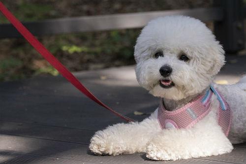 tipos de arneses para pasear perro