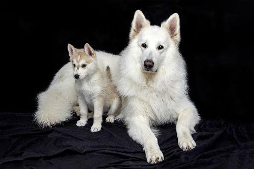 separar cachorros