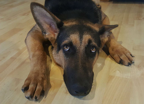 causas del miedo en los perros